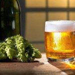 пиво и хмель